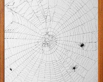 Spider Web | Argiope Spider Orb Web | Real Spider Web | Framed Spider Web