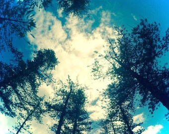 Pines in the Sky
