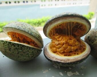 1000 Voacanga Africana Seeds