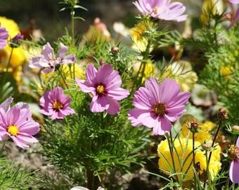 Flowers In Bloom 2