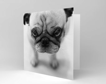 Card Greeting Cute Pug Puppy Dog Close Up Gift Cs1672