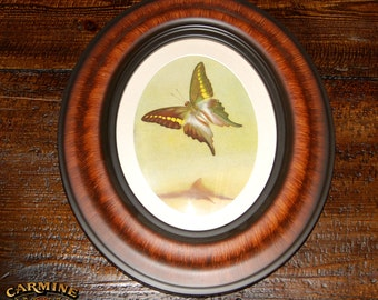 Antique Oval Framed Butterfly Picture