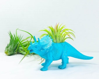 Any Color Plantasaurus / Triceratops Dinosaur Planter with Air Plant, Air Plant Holder, Dino Planter, Low Shipping, Great Gift