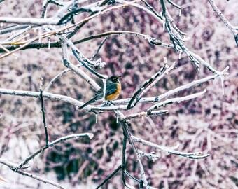 Cold Branch