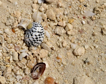 Beach Candy, Shells on Sand, Tropical Beach Shells, Seashells, Bedroom Art, Bathroom Decor, Beach House Art, Gift for Her, White Sand Beach