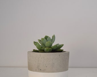 The Shortie Concrete Pot