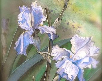 Lavender Iris - Cards
