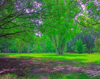 Park Landscape {Photography}