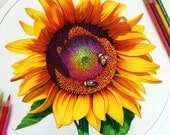 Colored Pencil Sunflower ...