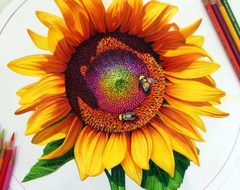 Colored Pencil Sunflower Drawing