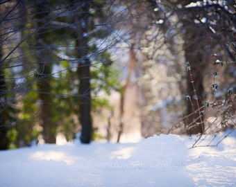 Snowy Winter Woods Snowscape Digital Backdrop