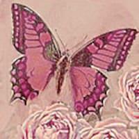 aPinkButterfly