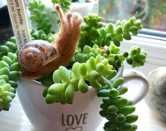 Lovely, cute felted garden snail