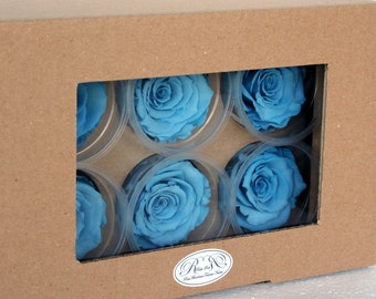 Set of six buttons blue stabilized eternal rose