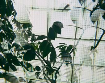 Fractal Plant 2 - 12 X 8 Photographic Print
