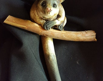 Australian possum on wooden branch