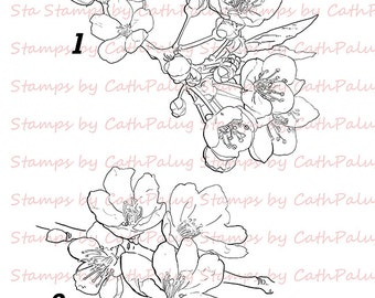 Digital stamp-Cherry Blossom-Art for Cards and Crafts