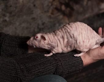 Realistic Silicone Lab Rat, hairless rat