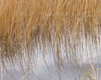 Reed Reflections #21