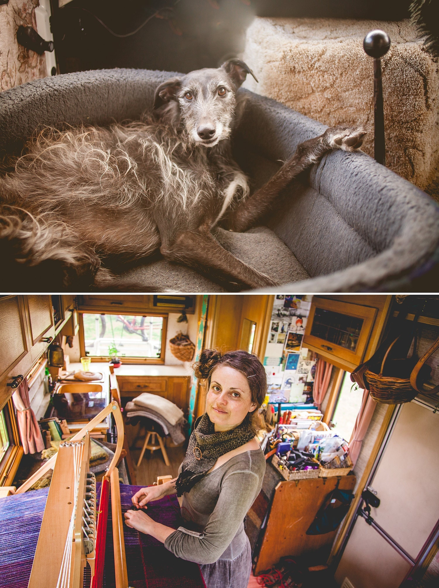 Lurcher hound and tiny weaving studio