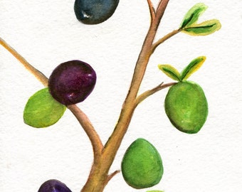 Olives, Olive Branch watercolor painting original 5 x 7 olive art,  kitchen wall art, illustration, food art, olive painting, kitchen decor