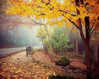 Monte Sano - Alabama - Landscape Photography - Forest Road, Autumn, Fall, Foliage - Beautiful Travel Photos - Nature - Warm Colors