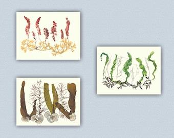 Seaweed art, Pressed seaweeds, Seaweed Pressings,  Victorian Botanicals, Seaweed Pressing Artwork, nautical art, coastal art Decoration