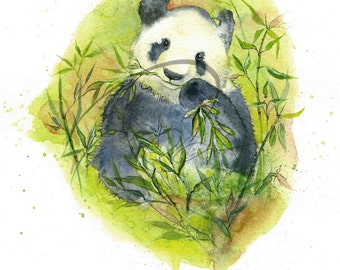 Munchies - Panda, Asian Animal, Bear, Rare Animal, Protected Wildlife, Watercolor Painting Available in Paper and Canvas by Olga Cuttell