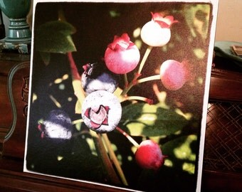 Oregon Blueberries Photo on Gallery Wrap Canvas