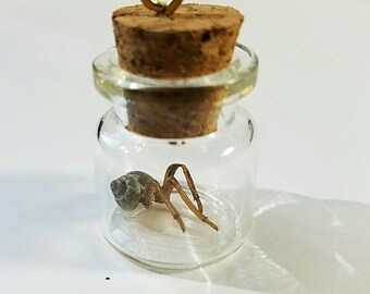 Cicada Shell Hybrid Creature Number Twenty Four