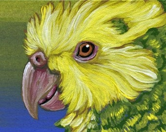 ACEO Parrot Yellow Head Amazon Bird Pet Original Painting Art-Carla Smale