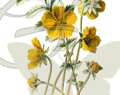 Flower Digital Download Wildflower Illustration Printable Clip Art Image