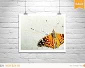 Sale 15% Butterfly Picture, Nature Photography, Fine Art Print, Butterfly Art, Insect Art, Spring Butterflies, Wall Print, Insect Print, Gol