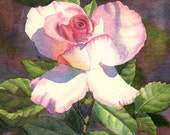 Pink Rose Watercolor Painting Print by Cathy Hillegas, 5x7