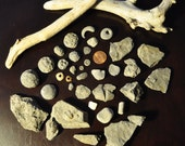 36 Various Lake Erie Beach Fossils