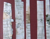 Birch trees, birch bark, Valentines Day card, I love you, anniversary, white and brown, true love always, whimsical
