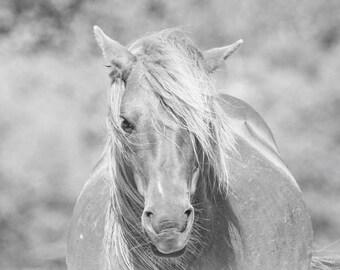 Wild Horse of Assateague Island Photo - 11x14 Black and White Animal Photography Print
