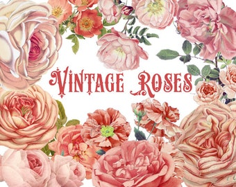 Vintage Peach Roses, Watercolor clipart and photoshop Brushes