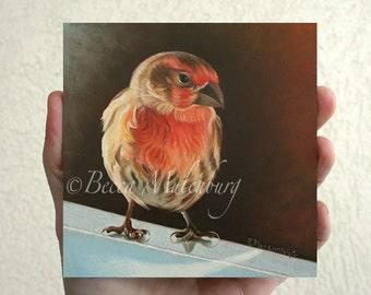 House Finch Original oil painting miniature wildlife nature fine art
