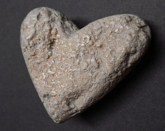 Fossil Heart Sculpture Carved from Crinoid Cluster