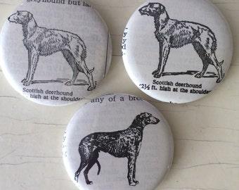 Scottish Deerhound Vintage Dictionary Illustration Magnet Set of 3