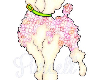 Pink Hydrangea Poodle Floral 8 x 10 inch Art Print- Daisy Wall Art - Home Decor