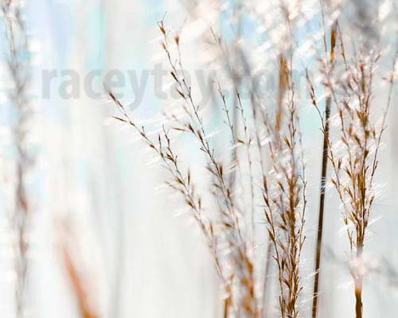 Beach Grass, White, Blue, Gold, Pastel Beach Decor, Nature Photography, Shabby Chic, Rustic, Nautical