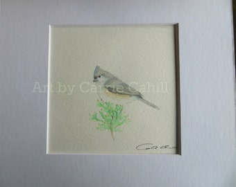 ORIGINAL Tufted Titmouse Watercolor Painting 6x6 matted