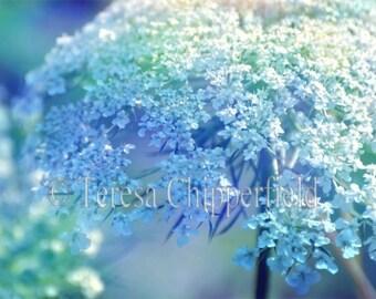 Queen Anne's Lace Photo, Flower Photography, Art Floral Photography,Nature Photography,Blue Bokeh Macro,Garden Wall Art,Botanical Home decor