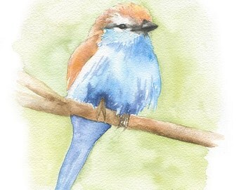 Racket-Tailed Roller Watercolor Painting 11x14 Giclee Print Woodland Animal Fine Art Bird