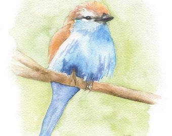 Racket-Tailed Roller Watercolor Painting Giclee Print 5x7 Nursery Art Woodland Animal Bird Watcher