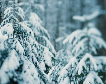 Winter Hush 04 ||| Winter Landscape Photography | Evergreen Trees in Snow |  Nature Photo | Cabin Decor | Winter Nature Photo