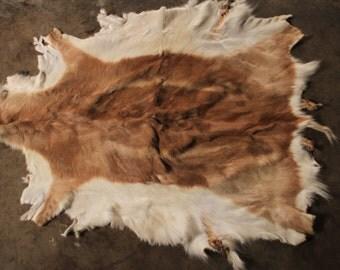 Vintage Tanned Blackbuck Antelope Hide