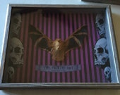 """Real Painted Bat Taxidermy Specimen in Shadowbox - 13x11x2"""""""